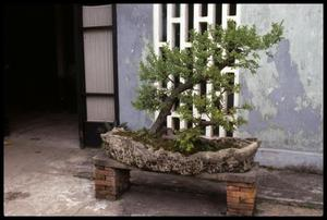 Primary view of object titled '[Potted Scenery Garden]'.