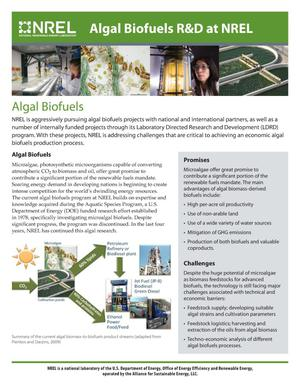 Primary view of object titled 'Algal Biofuels; Algal Biofuels R&D at NREL (Brochure)'.