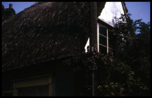 [Thatch roof]