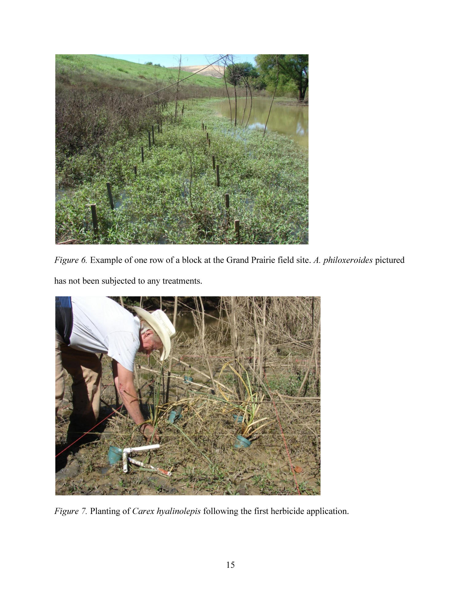 Integrating Selective Herbicide and Native Plant Restoration to Control Alternanthera philoxeroides (Alligator Weed)                                                                                                      15
