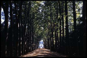 Primary view of object titled '[Tree Lined Entrance]'.