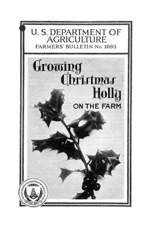 Primary view of object titled 'Growing Christmas holly on the farm.'.
