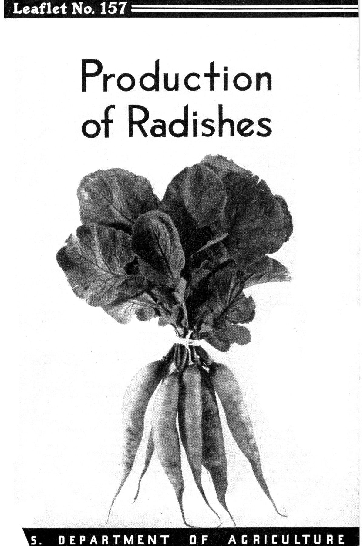 Production of radishes.                                                                                                      1