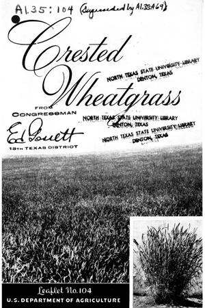 Crested wheatgrass.