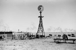 Primary view of [Photograph of a windmill in a field of livestock, 2]