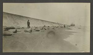 Primary view of [Seawall in Galveston]