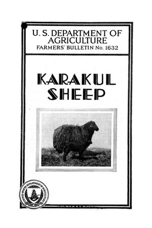 Primary view of Karakul sheep.
