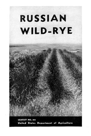 Primary view of object titled 'Russian wild-rye.'.