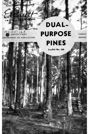 Primary view of object titled 'Dual-Purpose Pines.'.