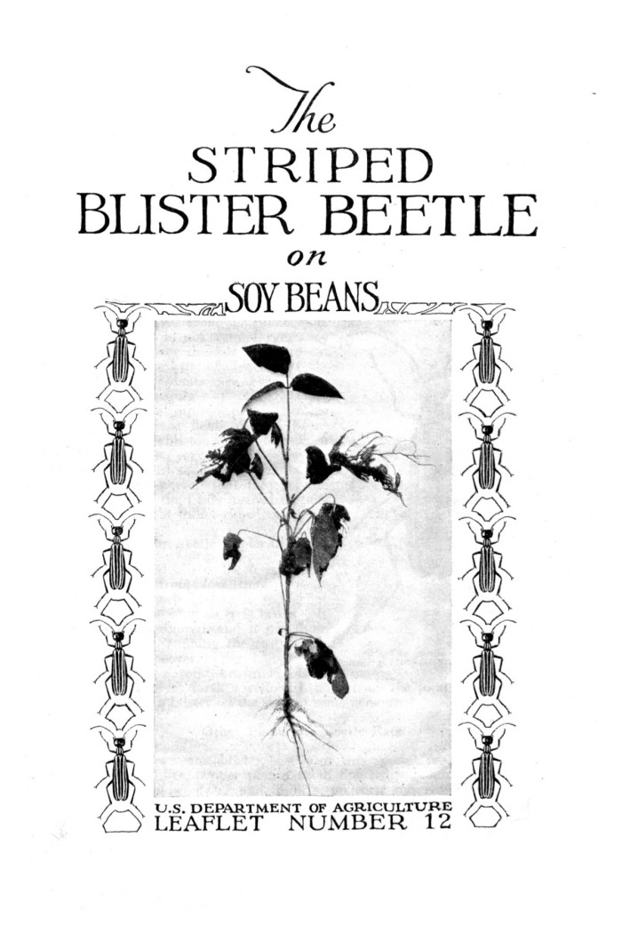 The Striped Blister Beetle on Soy Beans  - Digital Library