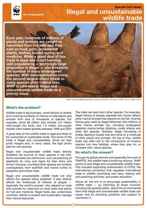 Primary view of object titled 'Species Fact Sheet: Illegal and Unsustainable Wildlife Trade'.