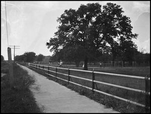 Primary view of object titled '[Campus - Scene - Oak St.]'.