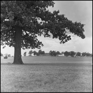 Primary view of object titled '[Golf Course Trees and Lawn]'.