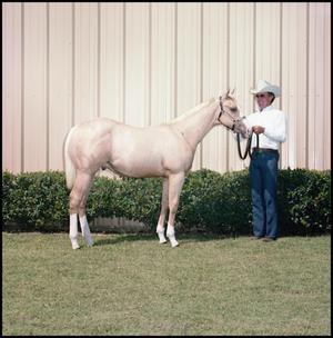 Primary view of object titled '[Tommy Manion with a Horse]'.