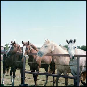 Primary view of object titled '[Horses at Manion Ranch]'.