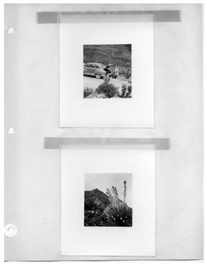 Primary view of object titled '[Two Boys on the Road with Car] and [Venezuelan Flora]'.