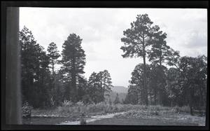 Primary view of object titled 'Mountain Forest'.