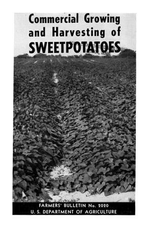 Primary view of object titled 'Commercial growing and harvesting of sweetpotatoes.'.