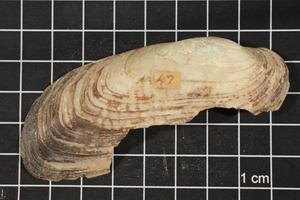 Primary view of object titled 'Popenaias popei, Specimen #1545'.
