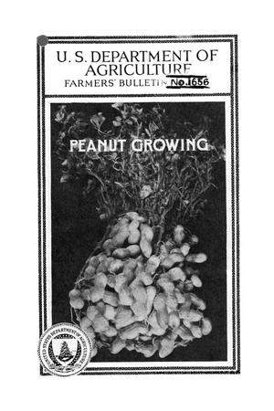 Primary view of object titled 'Peanut growing.'.