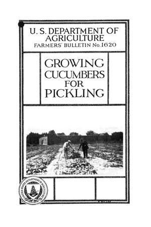 Primary view of object titled 'Growing cucumbers for pickling.'.
