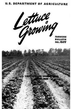 Primary view of object titled 'Lettuce growing.'.