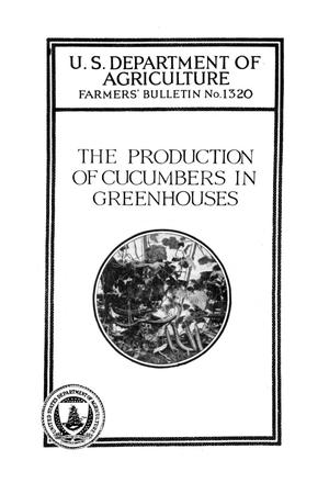 The production of cucumbers in greenhouses.