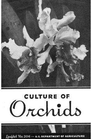 Primary view of object titled 'Culture of orchids.'.