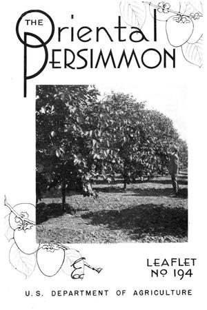 Primary view of object titled 'The Oriental Persimmon.'.