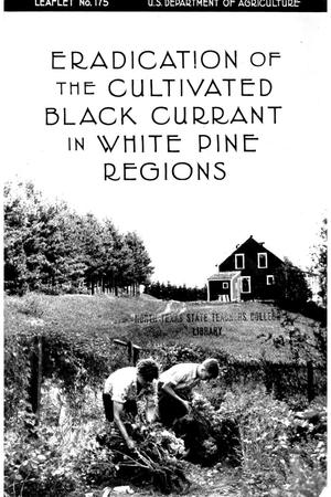 Eradication of the cultivated black currant in white pine regions.