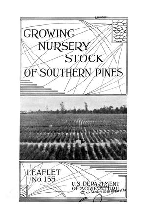 Primary view of object titled 'Growing nursery stock of southern pines.'.