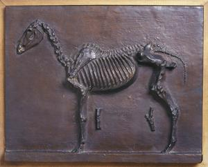 Primary view of object titled 'Horse Skeleton'.