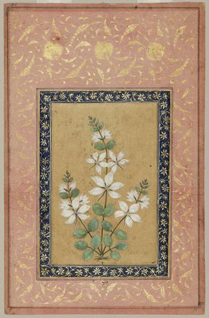 Primary view of object titled 'A Flowering Plant'.