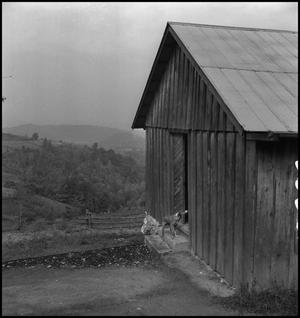 Primary view of object titled '[Dog outside Locust Grove School]'.