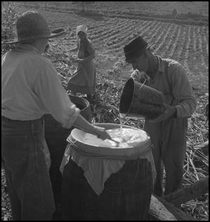 Primary view of object titled '[Men straining the sweet sorghum juice]'.