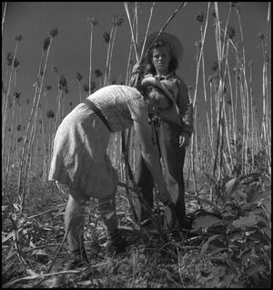 Primary view of object titled '[Young women harvesting cane]'.