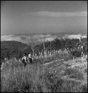 Primary view of object titled '[Two boys walking through hillside cornfield]'.