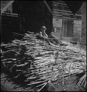 Primary view of object titled '[Pile of sorghum(1)]'.