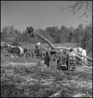 Primary view of object titled '[Seated at the sorghum press]'.
