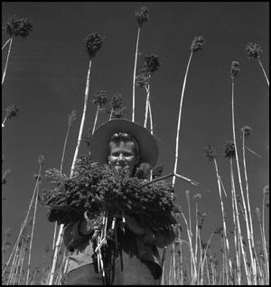 Primary view of object titled '[Girl holding sorghum grain]'.
