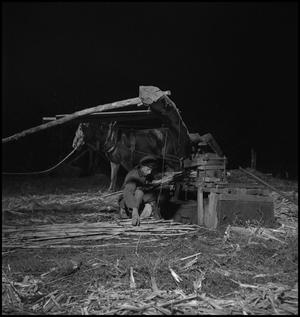 Primary view of object titled '[Mule driven press]'.