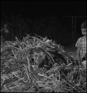 Primary view of object titled '[Hiding under the cane]'.