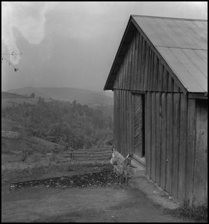 Primary view of object titled '[Dog outside Locust Grove School(2)]'.