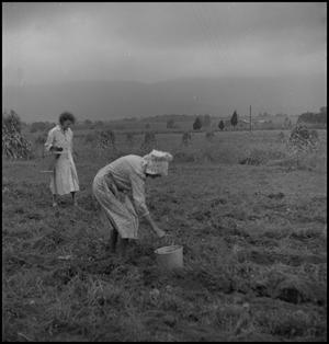 Primary view of object titled '[Pulling rocks in the field]'.