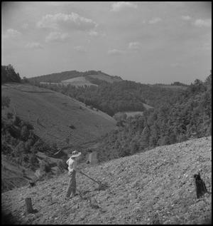Primary view of object titled '[Raking the harvested grounds]'.
