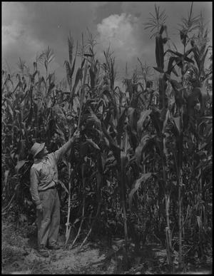 Primary view of object titled '[Wade Clark with corn]'.