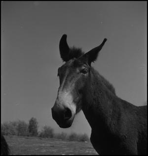 Primary view of object titled '[Donkey]'.