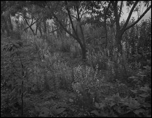 Primary view of object titled '[Plants by the river]'.