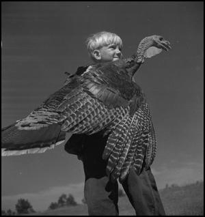 Primary view of object titled '[Holding a turkey]'.