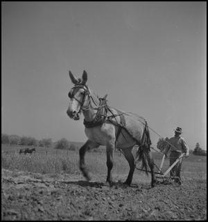 Primary view of object titled '[Wade Clark in the field]'.